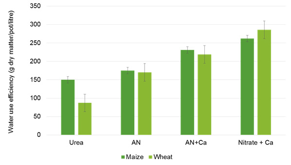 Figure 3: Omnia greenhouse pot trial data with test crops maize and wheat indicating water use efficiency with different nitrogen sources under drought stress.