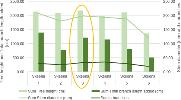 Differences in several tree growth parameters when applying different rates of Rhizovator™ PC to cherry trees – 'Skeena'.